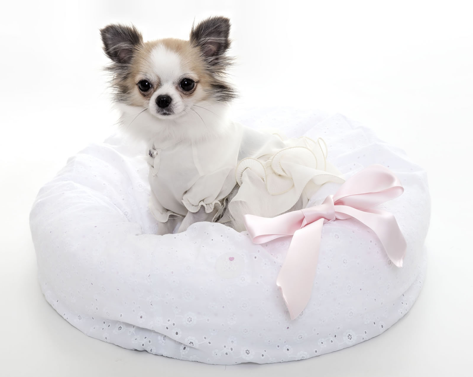 Un abitino per il proprio cane, tra moda e utilità